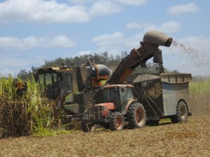Cane harvester - up close and personal.