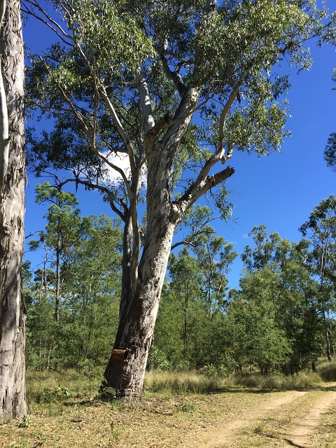 A tree I liked.