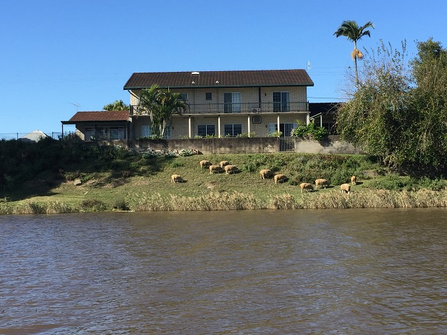 Loved these sheep grazing in front of the house.