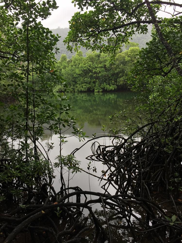 Oliver Creek from the Marja Boardwalk.