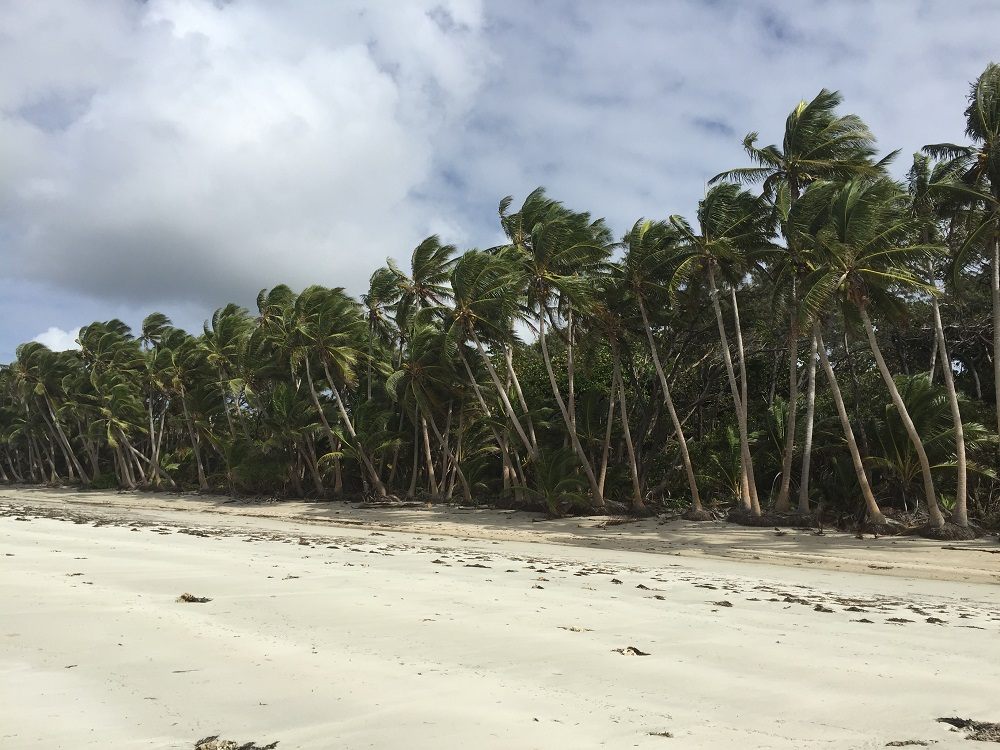 Coconut Palms as far as the eye can see.