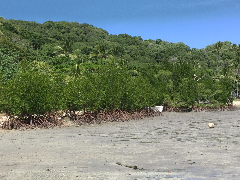 Mangroves and a dinghy at low tide. Portland Roads