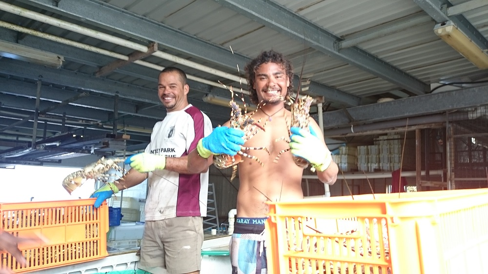 Cray fishermen displaying a couple of their catch. They sure look like they enjoy their job.
