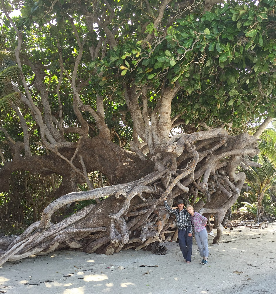 Mangrove and its exposed root system. Ric and Gill, Chilli Beach