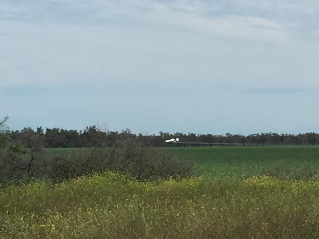 Crop duster, spraying the wheat crop just outside Collarenabri.