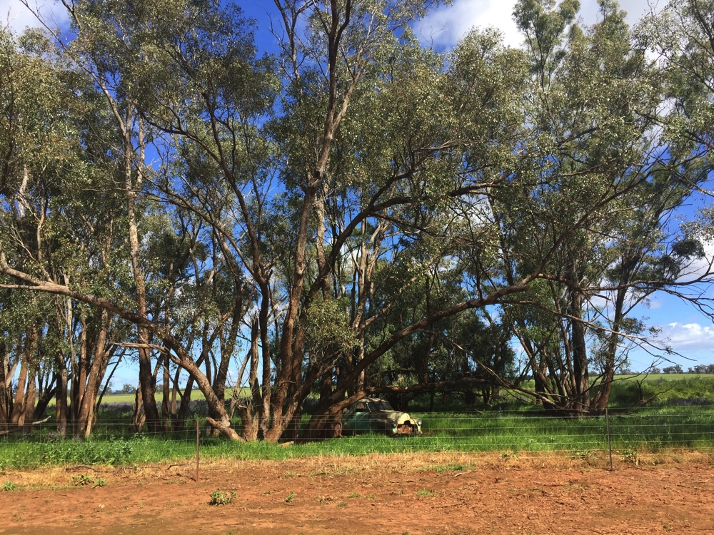 One of several campsites. The old car there was what Keith learnt to drive on, many years ago. Yarran Farm