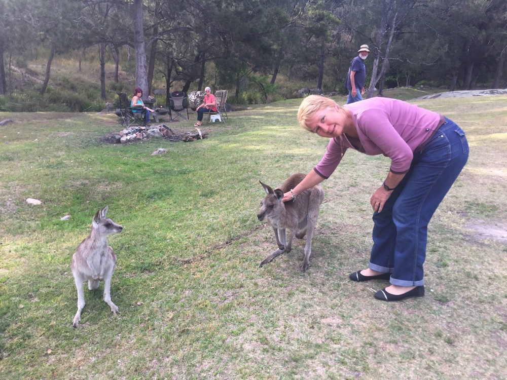 These roos have obviously seen a human to two. Mann River