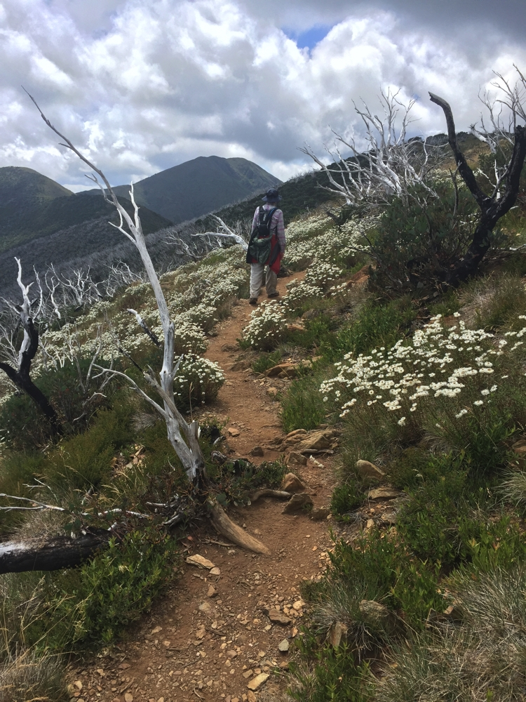 Gill, enjoying the flowers with Mt Feathertop in her sights.
