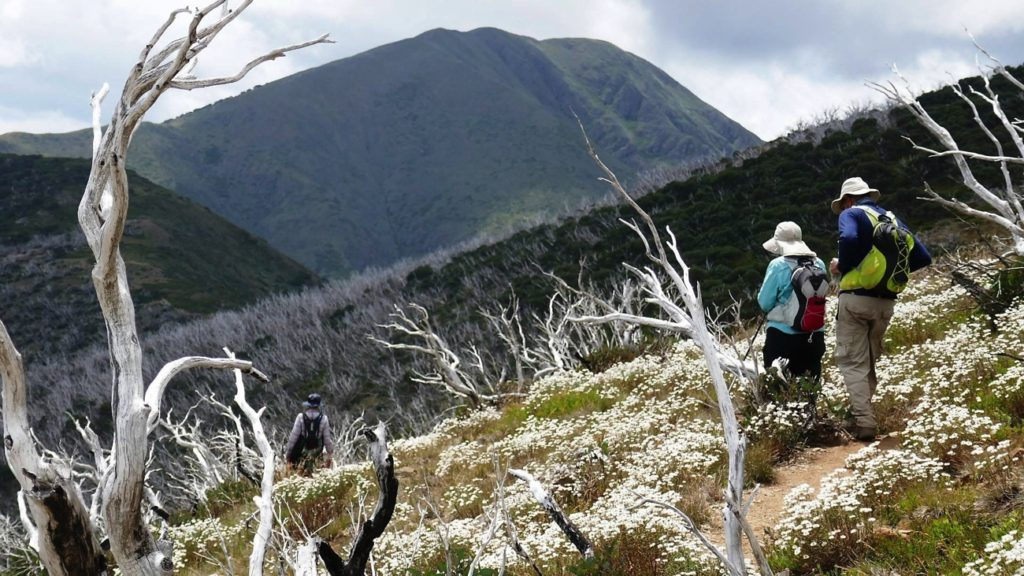Such a beautiful section of the walk, with Feathertop in the background.