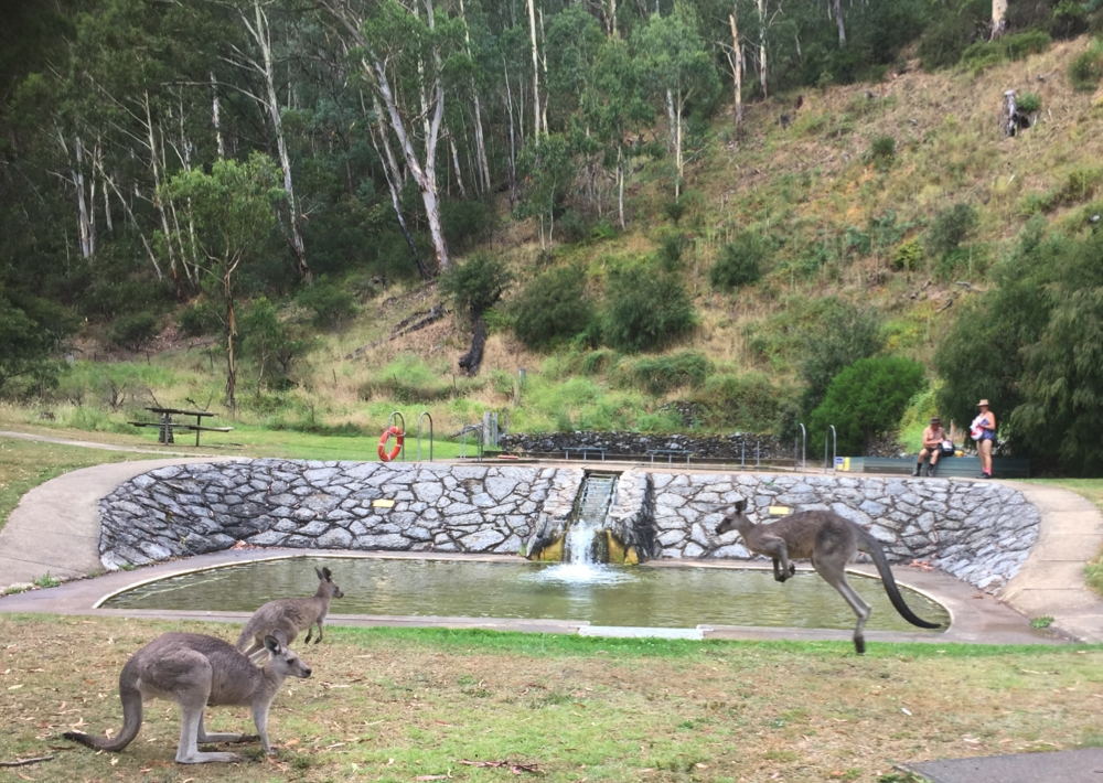 We weren't the only family at the thermal pool.
