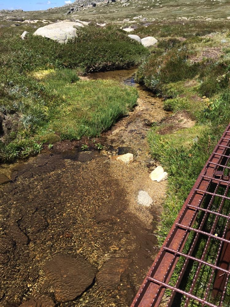 Alongside the boardwalk on the Thredbo to Kosiuzso track.