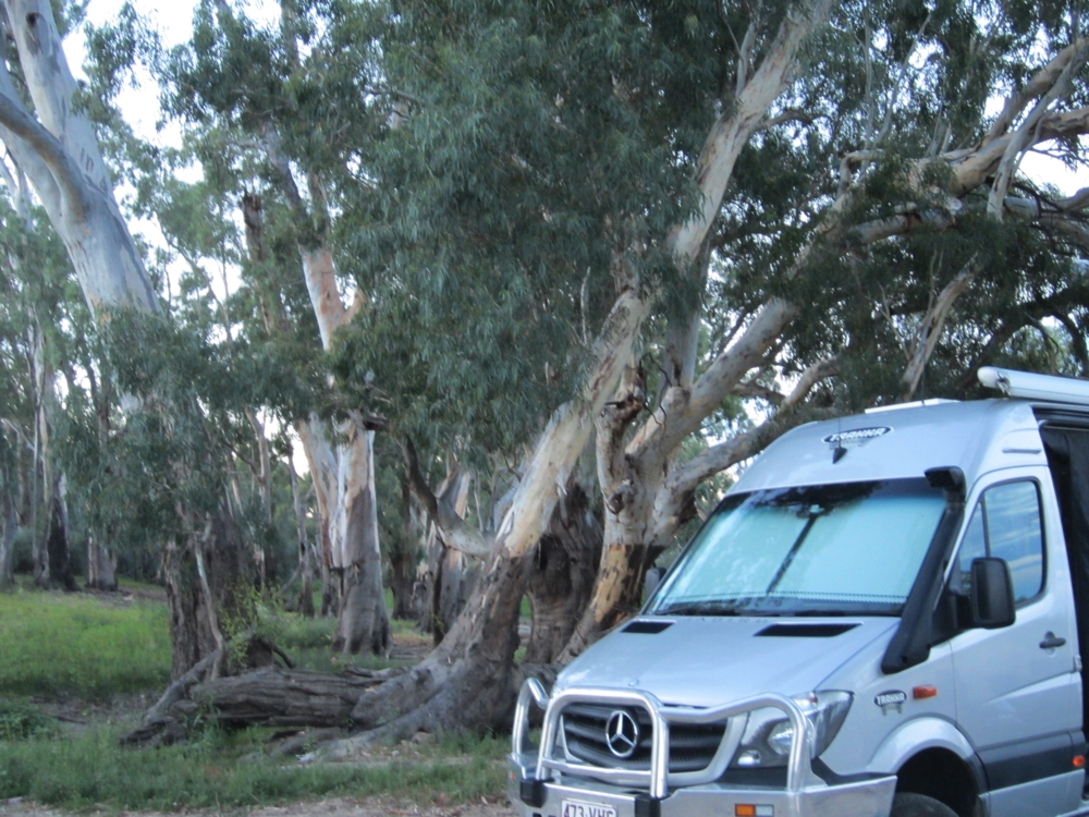 Our campsite under the Redgums beside Katarapko Ck.