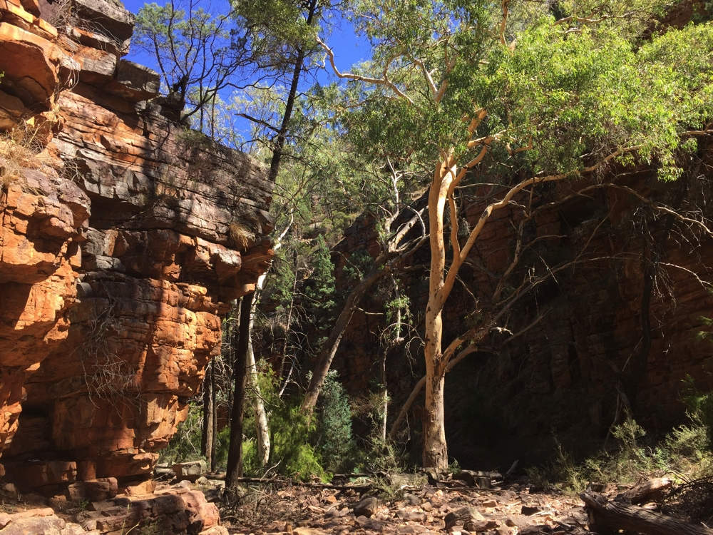 The red cliffs were quite beautiful, as were the trees growing in the gorge. Mt Remarkable