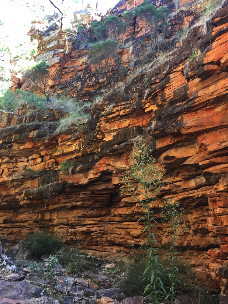 Beautiful red cliffs at Alligator Gorge, Mt Remarkable.