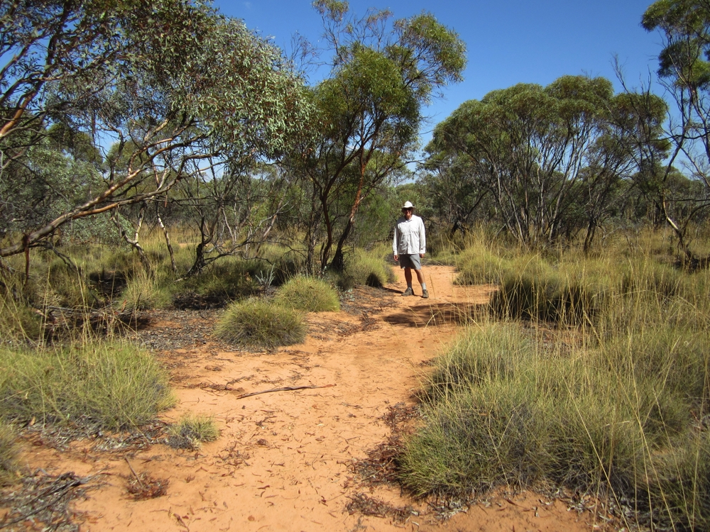 Walking through the Mallee scrub