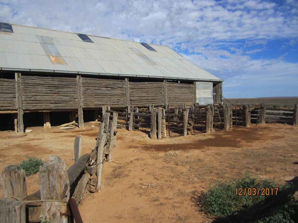 Mungo Station shearing sheds. Note the 'dropped log' construction of the walls. When the shed was first built shearing was done with hand clippers and there were many shearers, as times changed and steam-engine powered clippers became available the number of shearers was reduced to 5. Hence only the last 5 bays have the corrals for the shorn sheep.