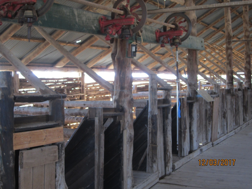 The inside of Mungo Station shearing shed. Note the wheels where the clippers received their power, and the chutes where the newly shorn sheep was pushed down to the outside.