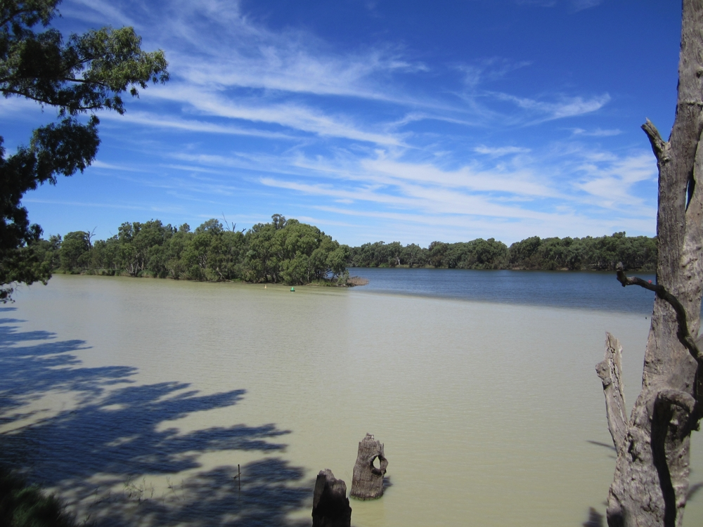 The confluence of the Darling River, closest and the Murray River in the background.