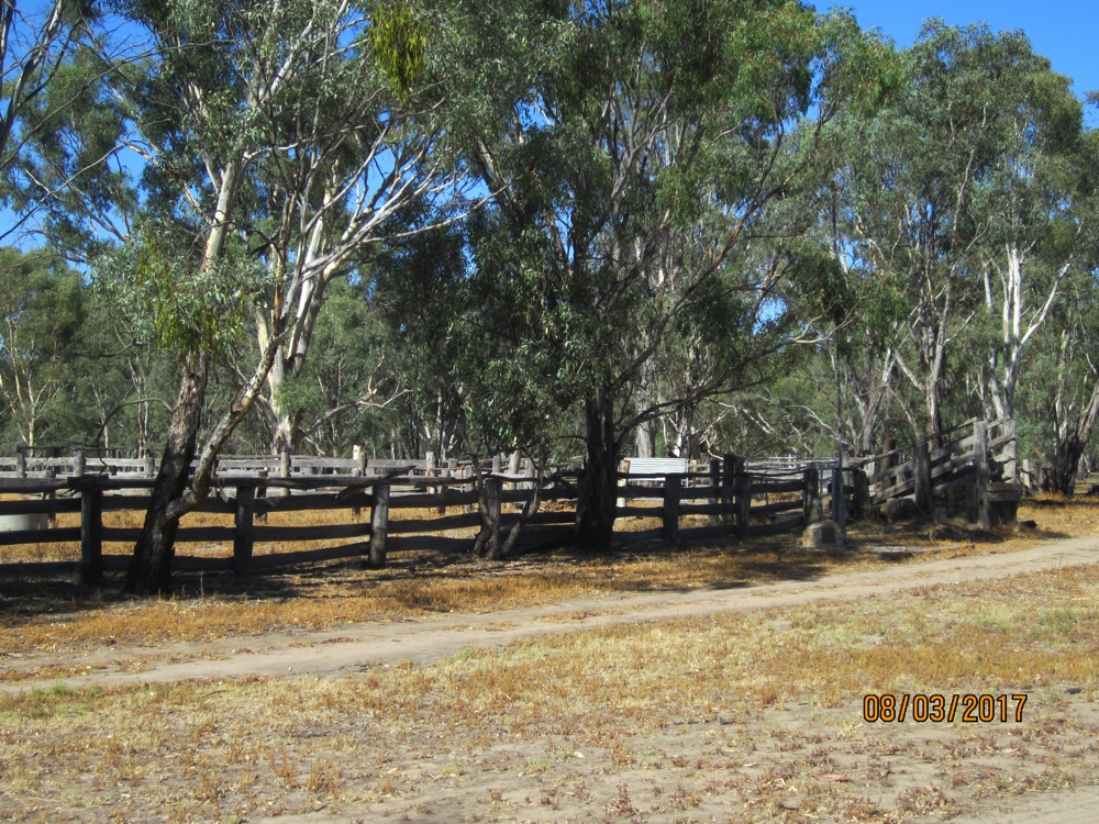 The muster yards in Barmah National Park