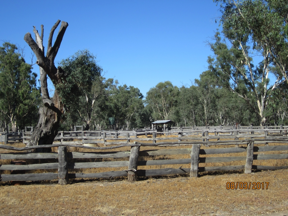 The historic muster yards in Barmah National park.