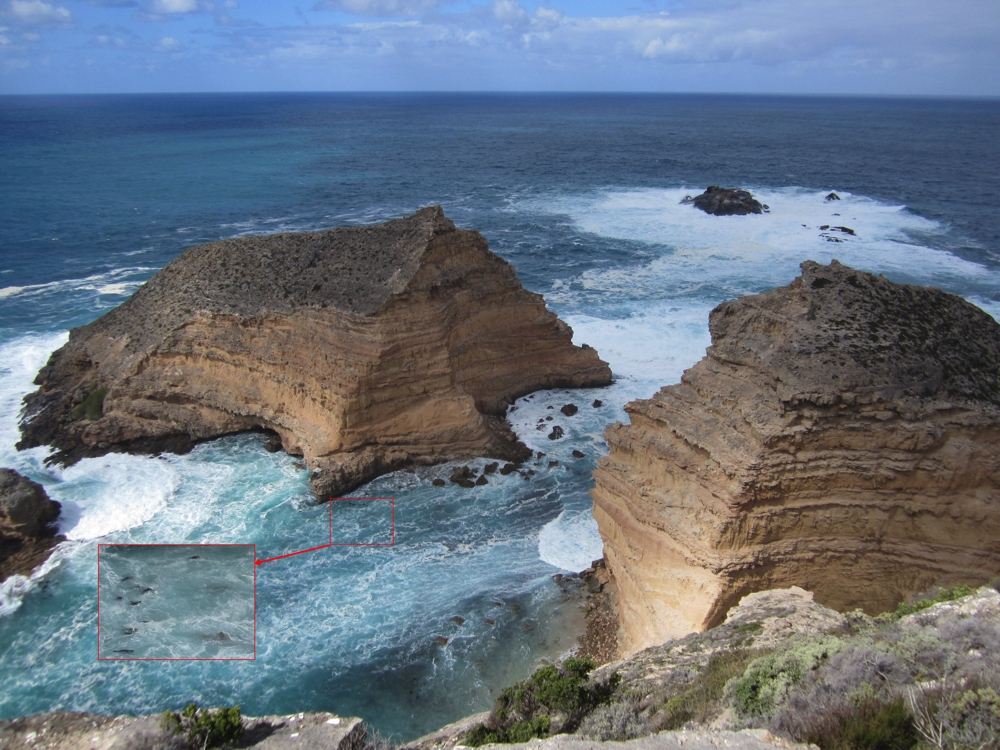 106 metre cliffs meet the ocean at Cape Wiles. See the fur seals, enlarged in the inset.
