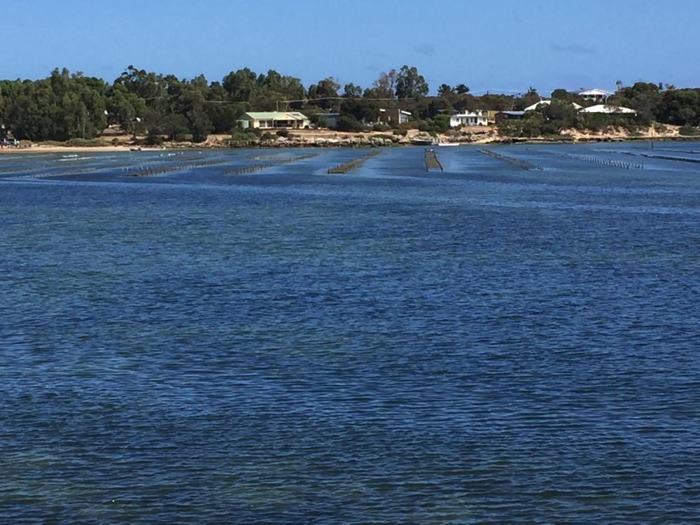 Across the oyster beds to Coffin Bay township.