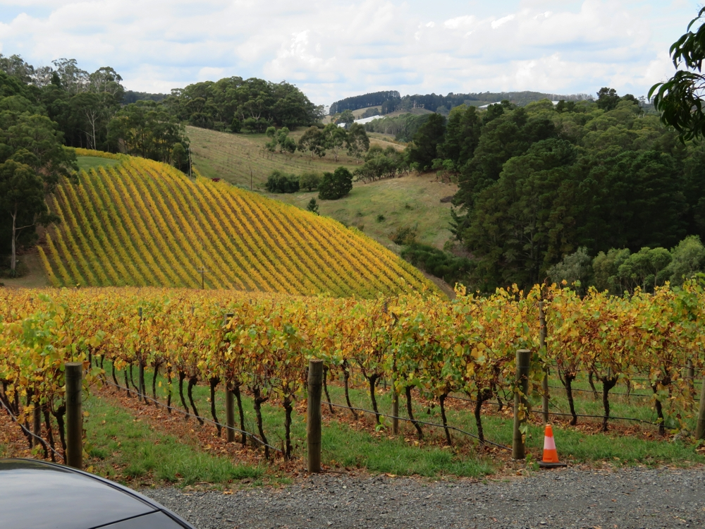 Vineyards at Mount Lofty Ranges. Beautiful autumn colours.