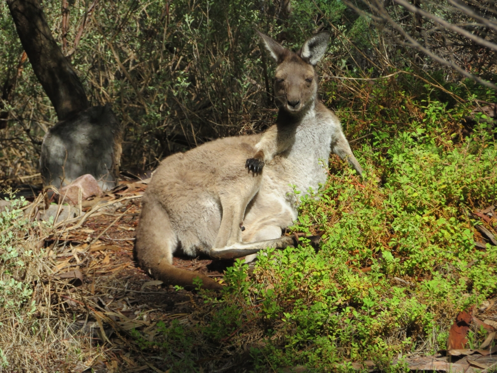 No, please don't get up. We're just passing through. Mt Remarkable.