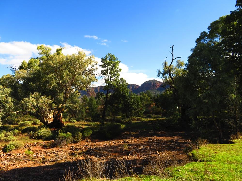 Dry creek bed on the Yuluna Hike.