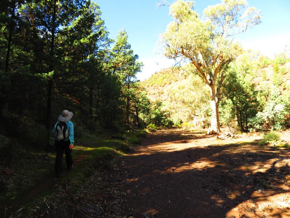 The path, like a bridle path, took us alongside the dry creek bed. Yuluna Hike.