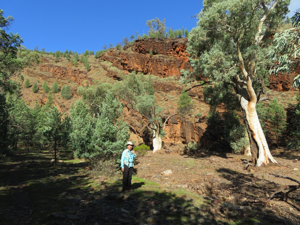 This is the countryside that inspired artist Hans Heysen who depicted this type of scenery in his works (none with me it in though!). Yuluna Hike