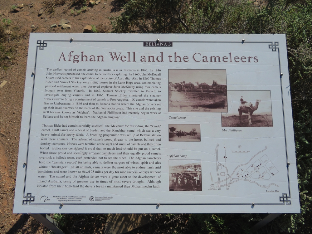 The Afghans had a camp not far from Beltana. This plaque gives some history of the camp.