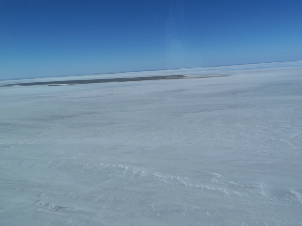 One of the islands on which the pelicans breed when there's water in Lake Eyre.