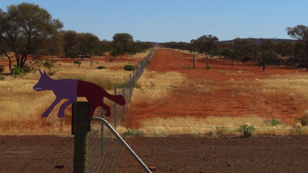 The Dog Fence built in the 1880s to limit the spread of wild dogs and dingoes goes from South Australia to Queensland. I haven't been able to find out any details of this one in WA.