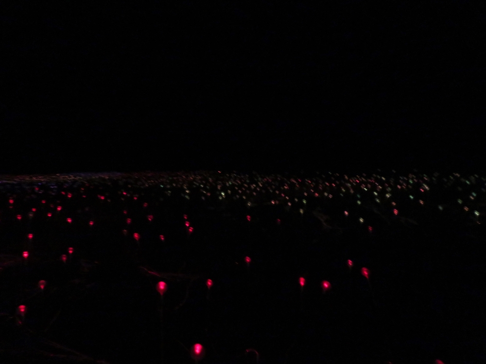 A beautiful experience at Field of Light. Pity you can't also see the stars in the sky in this photo.