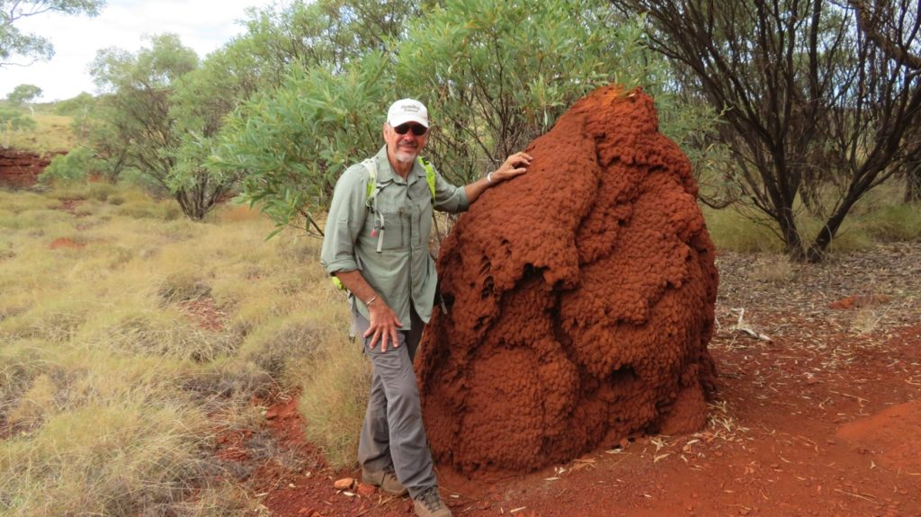 Termite nests are beginning to appear, the further north we head.