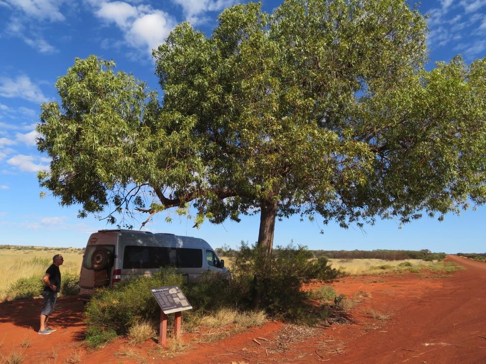 A beautiful kurrajong tree provides a shady spot to stop.