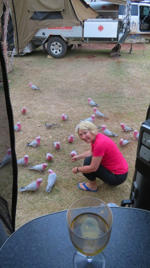 The bird lady - at Tom Price caravan park