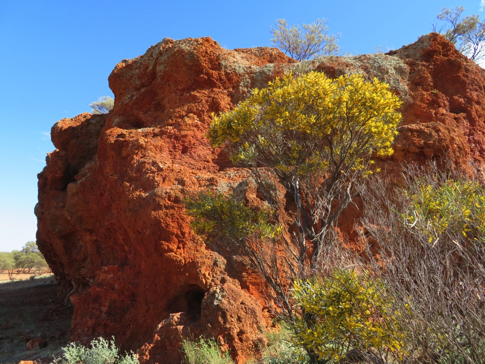 The acacias blooming against the rocky outcrops look so wonderful.